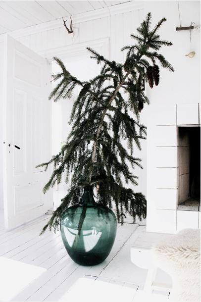 christmas tree in glass jug