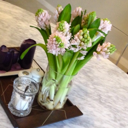 Friday Flowers hyacinths